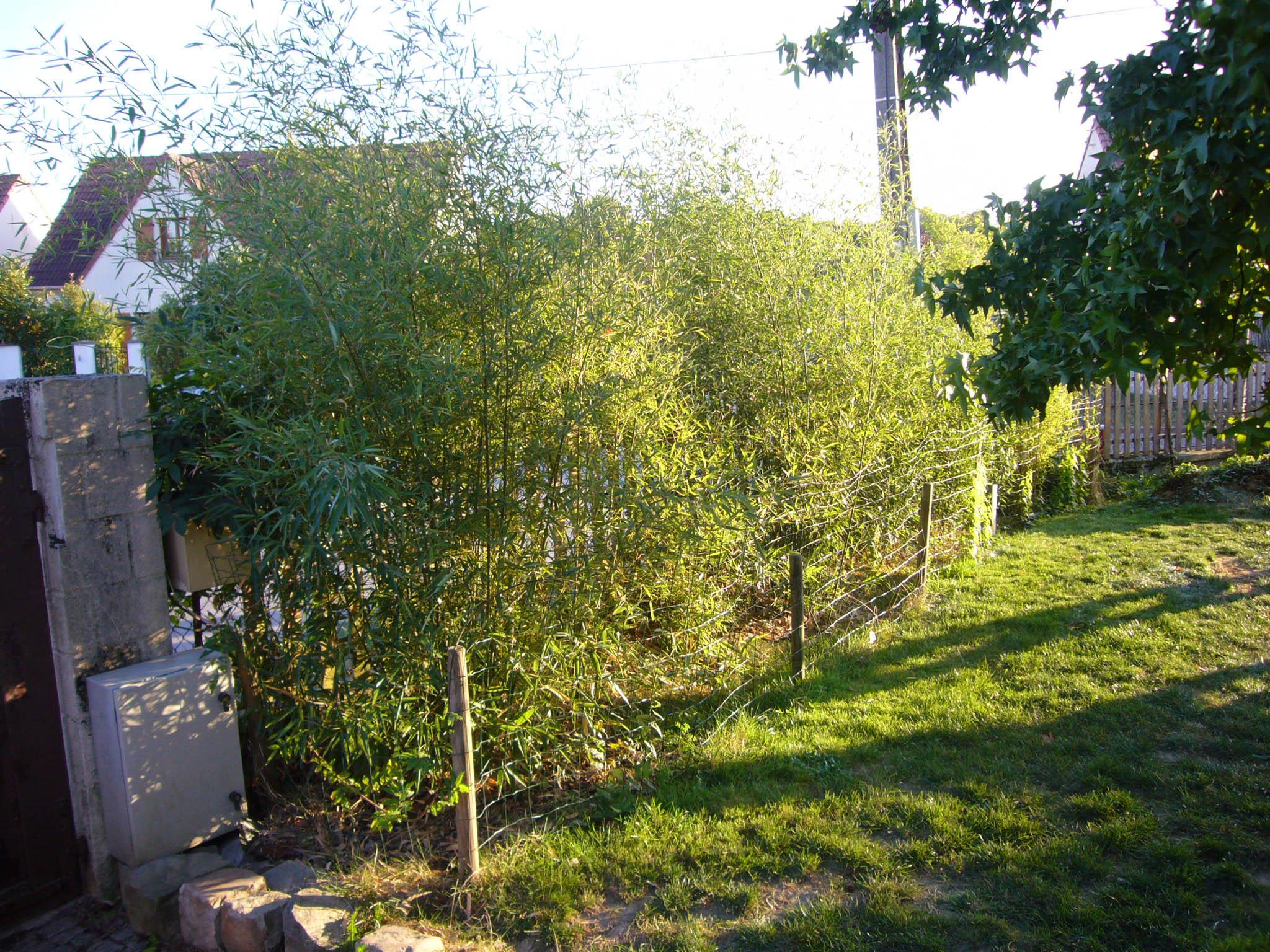 subaudio les bambous comment planter une haie de bambous humilis et bissetii. Black Bedroom Furniture Sets. Home Design Ideas