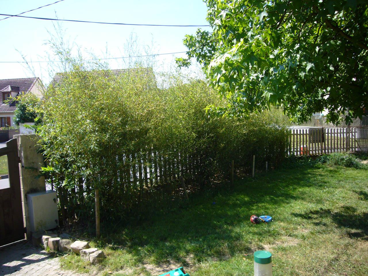 planter du bambou en haie plantation bambous plantation duune haie de bambous villenave. Black Bedroom Furniture Sets. Home Design Ideas